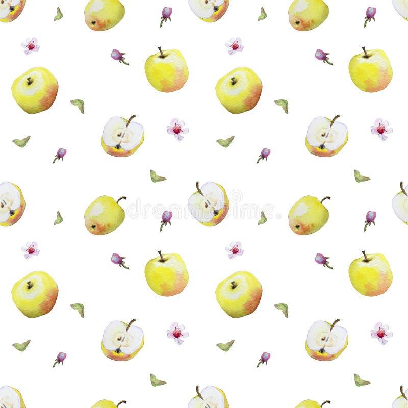 Akwarela wzór żółci jabłka i okwitnięcia ilustracja wektor