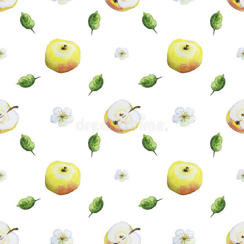 Akwarela wzór jabłka ilustracja wektor