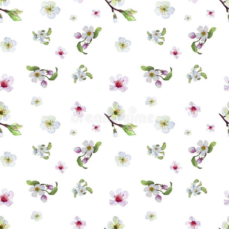Akwarela wzór z aplle kwiatami royalty ilustracja