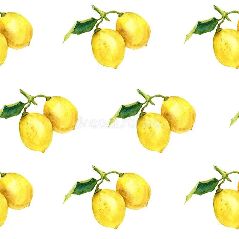 Akwarela wzór z cytrynami Botaniczna ilustracja ilustracji