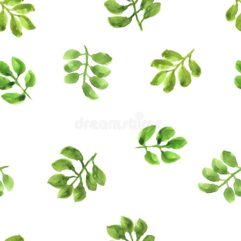 Akwarela wzór z odosobnionymi zielonymi liśćmi zdjęcia royalty free