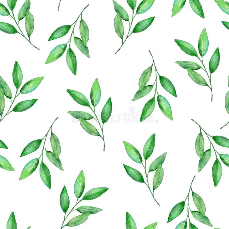 Akwarela wzoru zieleni cytryny bezszwowe gałąź ilustracji
