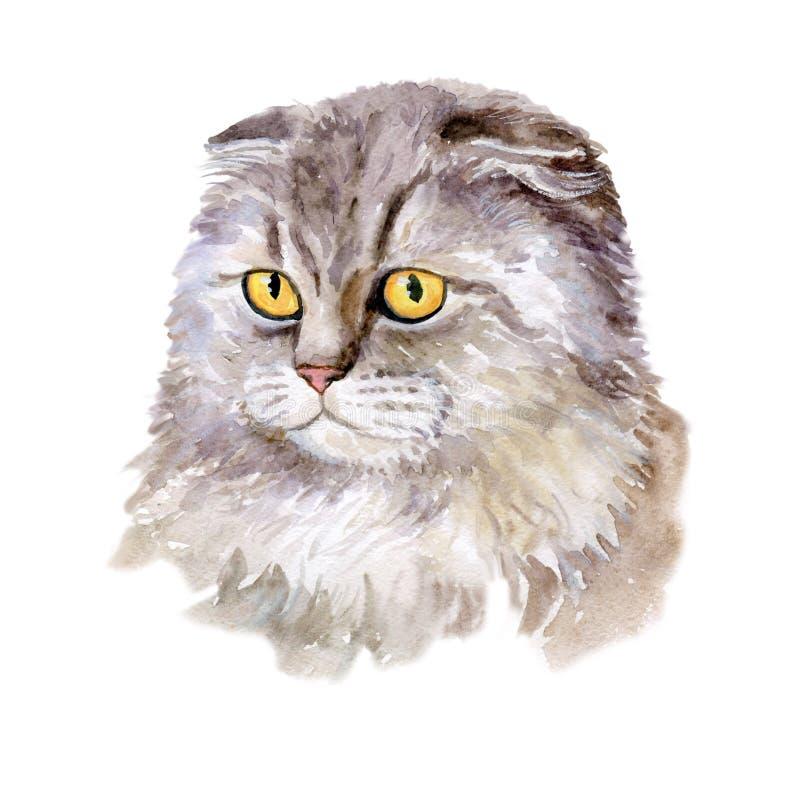 Akwarela zamknięta w górę portreta popularny Brytyjski fałdu shorthair kota traken odizolowywający na białym tle Słyszący rzadki  royalty ilustracja