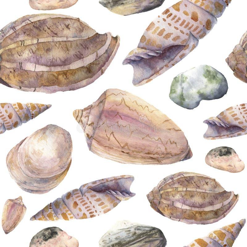 Akwarela zwrotnika wzór z seashells i morze otoczakami Wręcza malować zwrotnik skorupy, kamienie odizolowywających na bielu i ilustracja wektor
