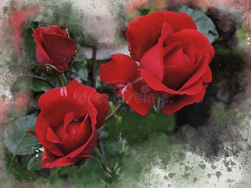 Akwarele malować czerwone róże ilustracja wektor
