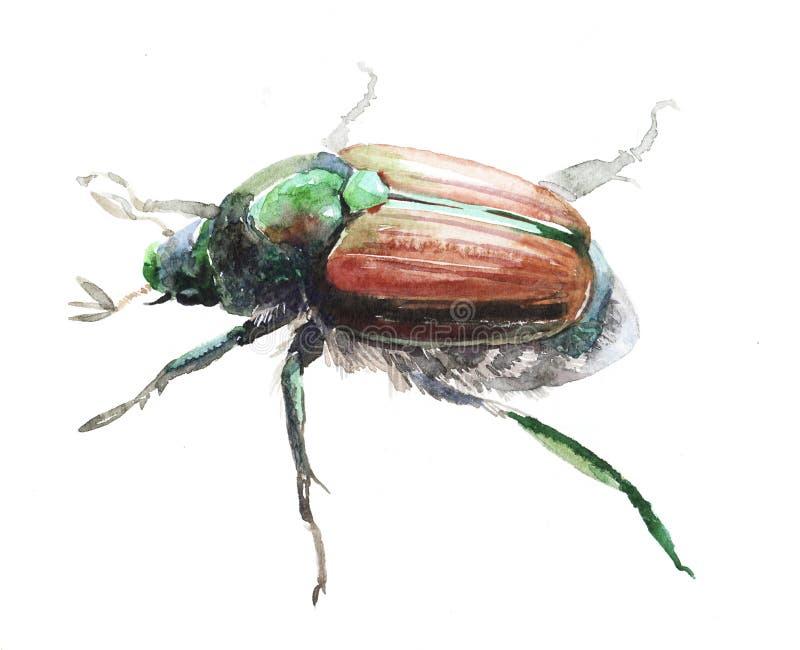 Akwareli ścigi insekta pojedynczy zwierzę royalty ilustracja
