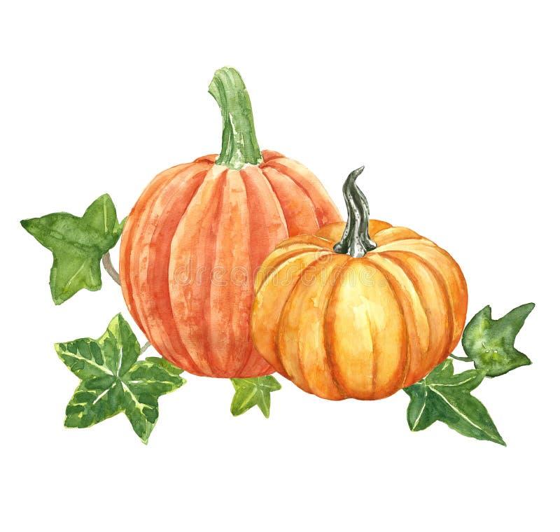 Akwareli bani pomarańczowy skład, odizolowywający na białym tle Jesieni żniwo, spada dojrzali pomarańczowi warzywa i bluszczy liś ilustracja wektor