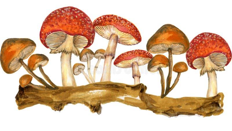 Akwareli botaniczna jesień i spadków lasowi elementy ustawiający wręczamy pa royalty ilustracja