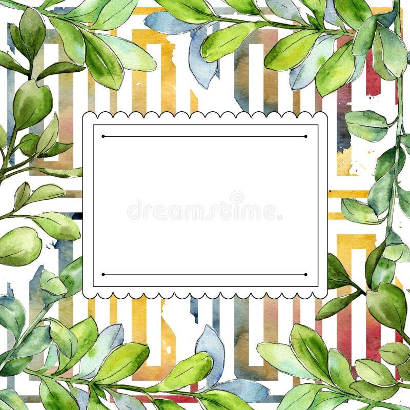 Akwareli boxwood zieleni liść Liść rośliny ogródu botanicznego kwiecisty ulistnienie Ramowy rabatowy ornamentu kwadrat ilustracji