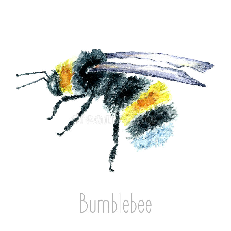 Akwareli Bumblebees ilustracja wektor
