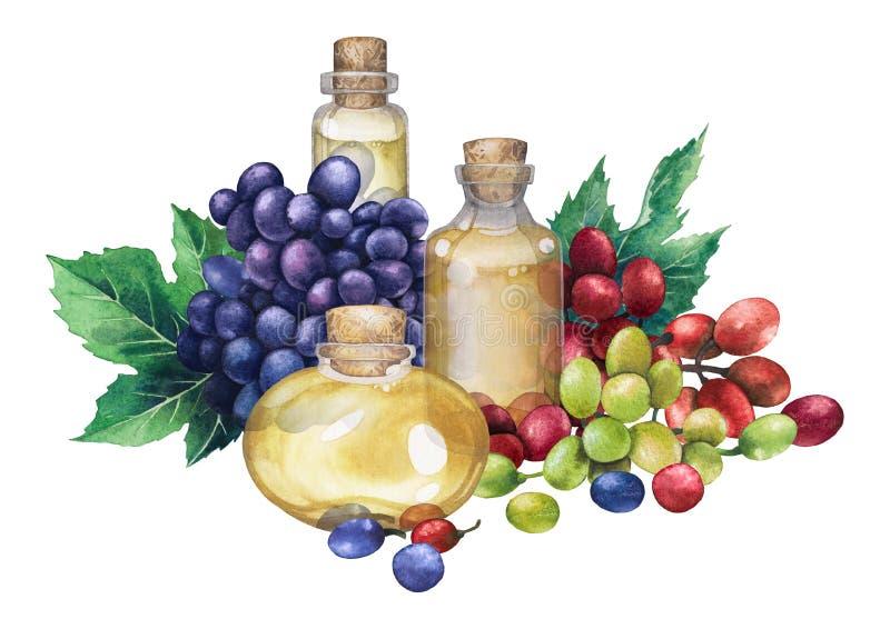 Akwareli butelka robić winogrona ziarno istotny olej ilustracji