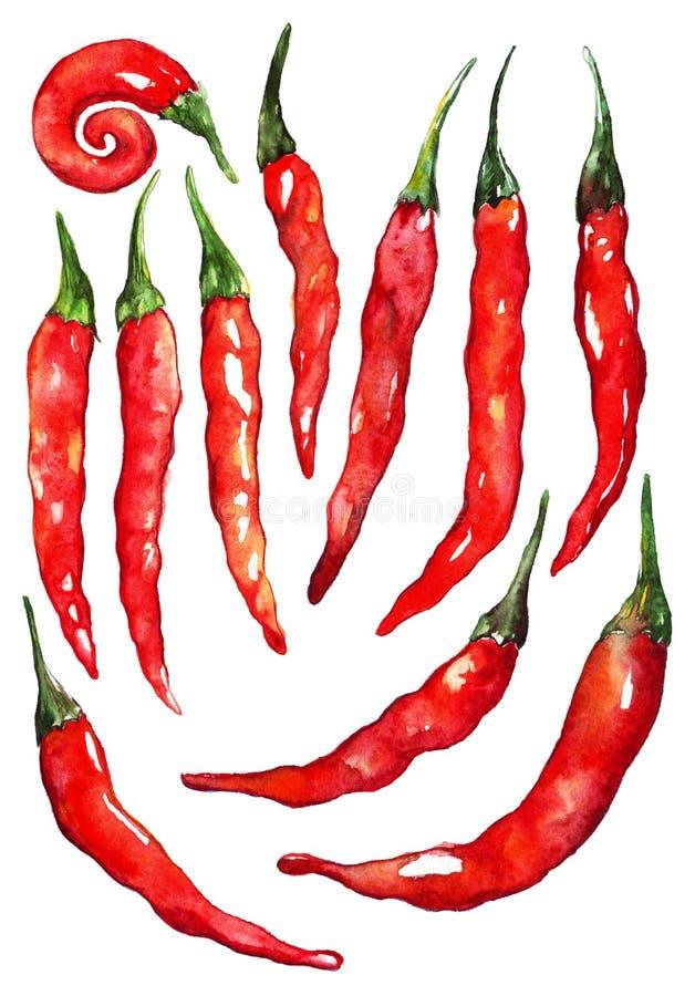 Akwareli chili gorący chili korzenny pieprz ustawia odosobnionego ilustracji