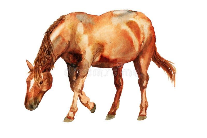 Akwareli czerwieni koń ilustracji