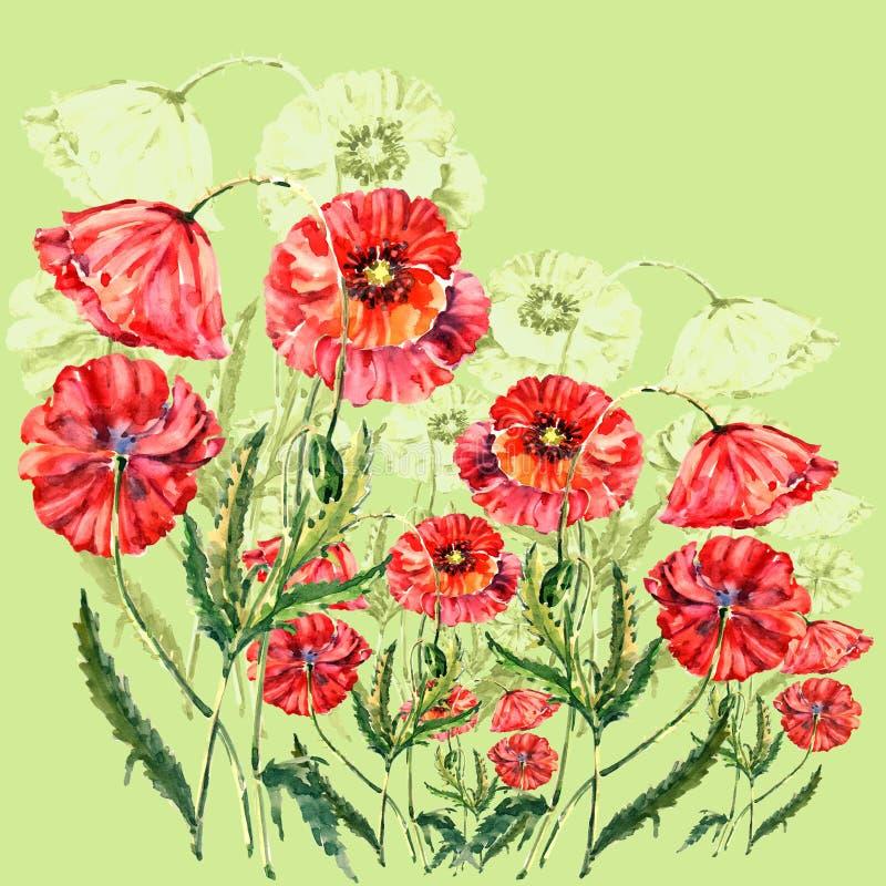 Akwareli czerwieni maczki Ilustracja na wapno zieleni tle ilustracja wektor