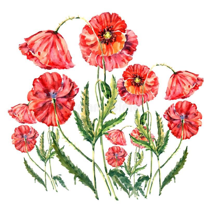 Akwareli czerwieni maczki tła ilustracyjny stary pergaminowy ślimacznicy biel ilustracji