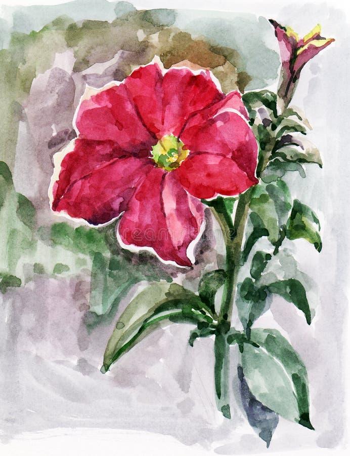 Akwareli czerwona petunia z tłem ilustracja ilustracja wektor
