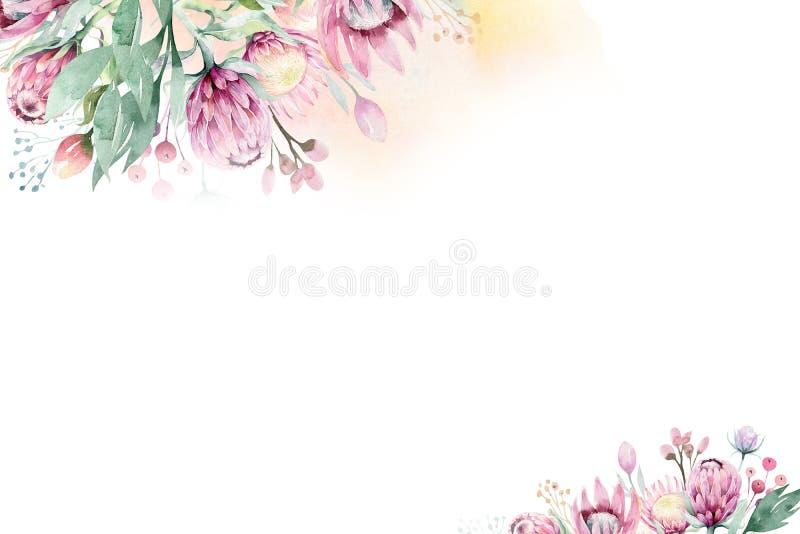 Akwareli dekoracji wiosny lata Kwiecisty tło z okwitnięcia protea kwiatem Ślubna dekoracji rama z kwiecistym ilustracji