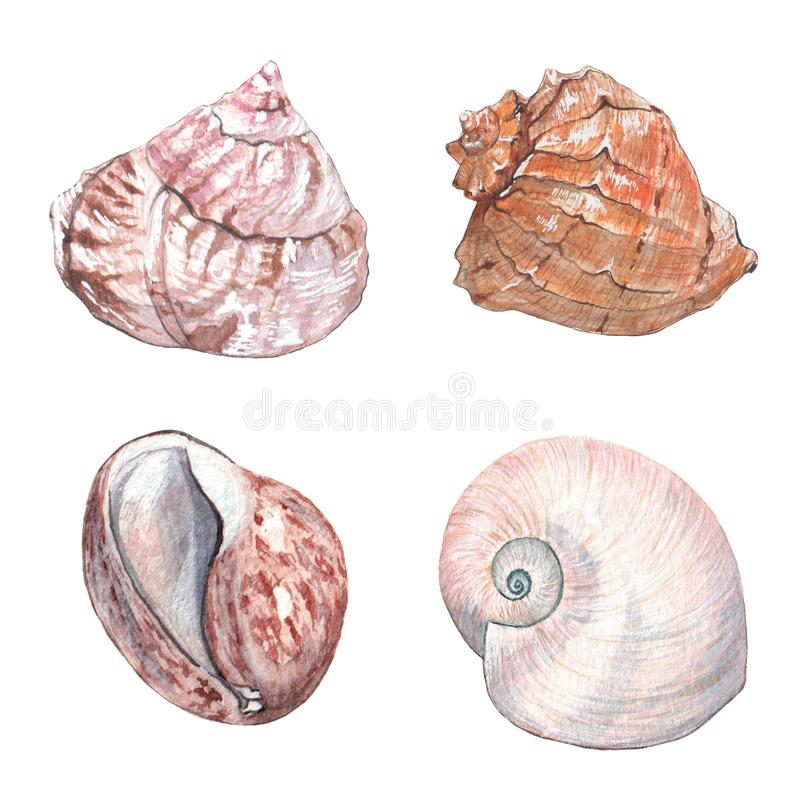 Akwareli delikatni seashells royalty ilustracja