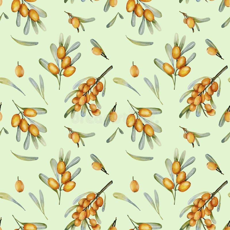 Akwareli dennego buckthorn jagod bezszwowy wzór ilustracja wektor
