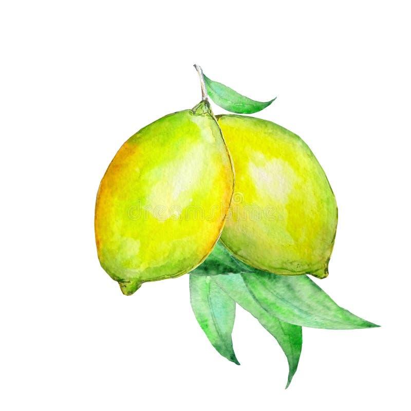 Akwareli dwa żółte cytryny ilustracja wektor