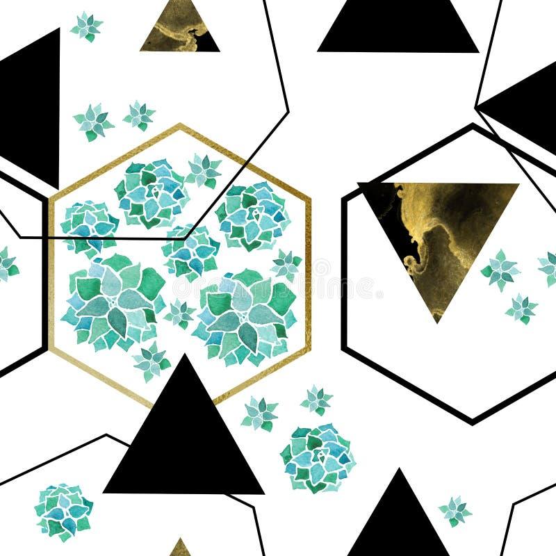 Akwareli echeveria sukulenty i geometrical minimalistyczny nowożytny bezszwowy złotych i czarnych sześciokątów royalty ilustracja