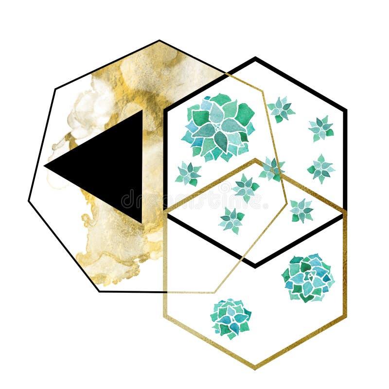 Akwareli echeveria sukulenty, sześciokąty i trójboka geometrical minimalistyczny nowożytny skład dalej złoci i czarni ilustracji