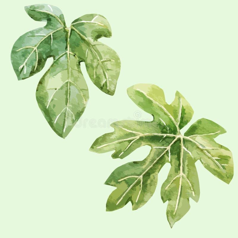 Akwareli figi ręka rysujący liście ilustracja wektor