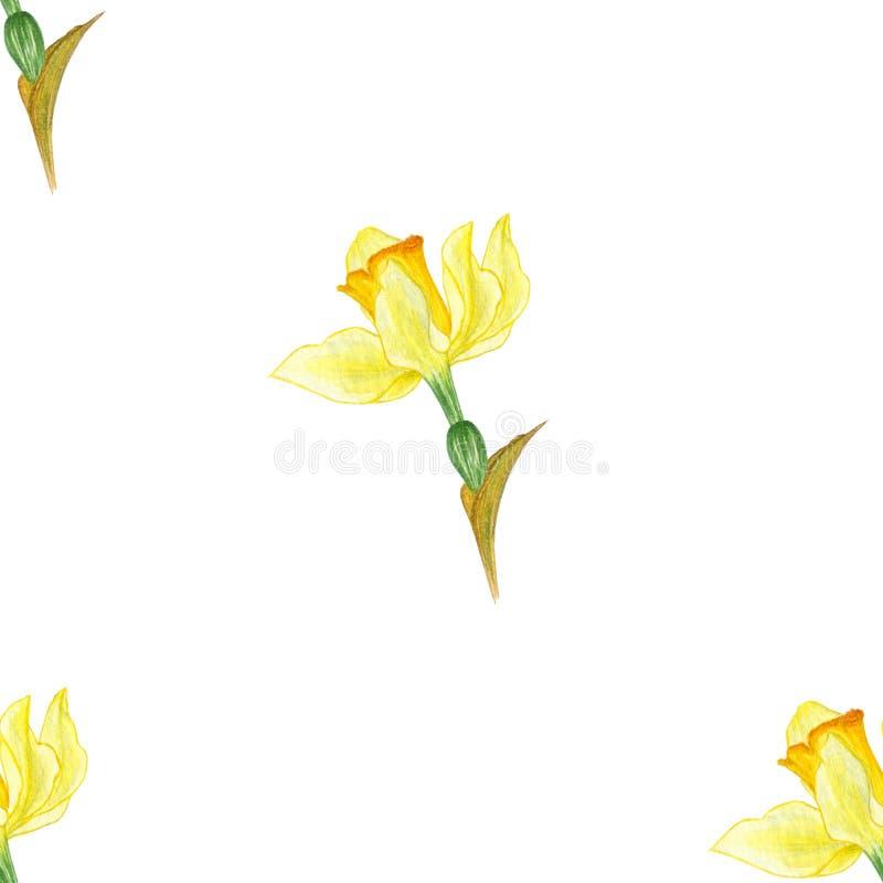 Akwareli flowers/natury wzór Bia?y backgraund ilustracji