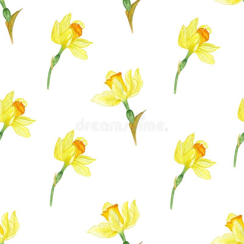 Akwareli flowers/natury wz?r Bia?y backgraund ilustracja wektor