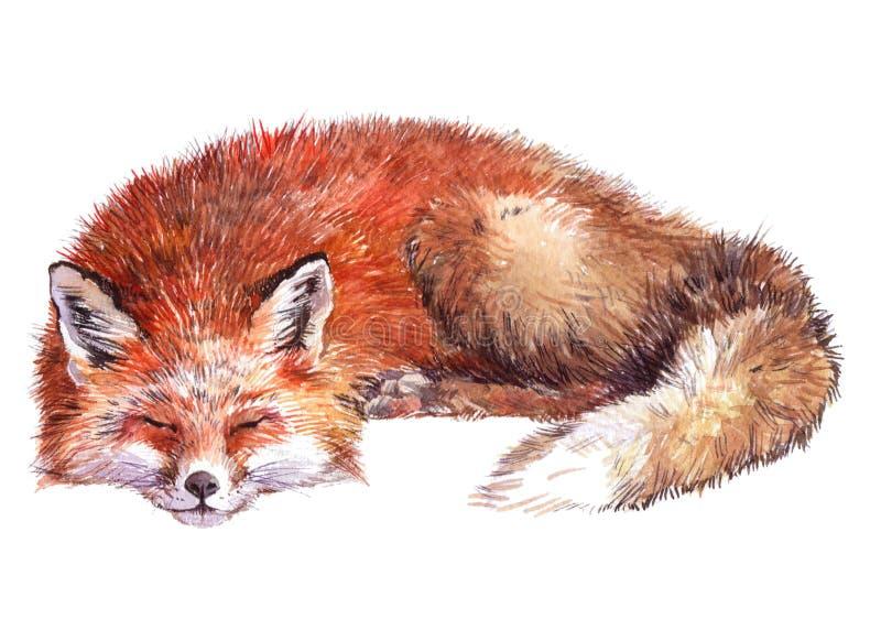 Akwareli Fox pojedynczy zwierzę zdjęcia royalty free