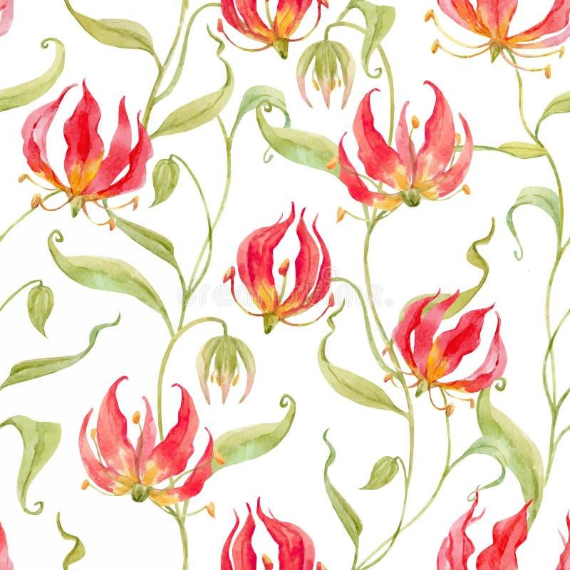 Akwareli gloriosa rothschildiana wektorowy wzór royalty ilustracja