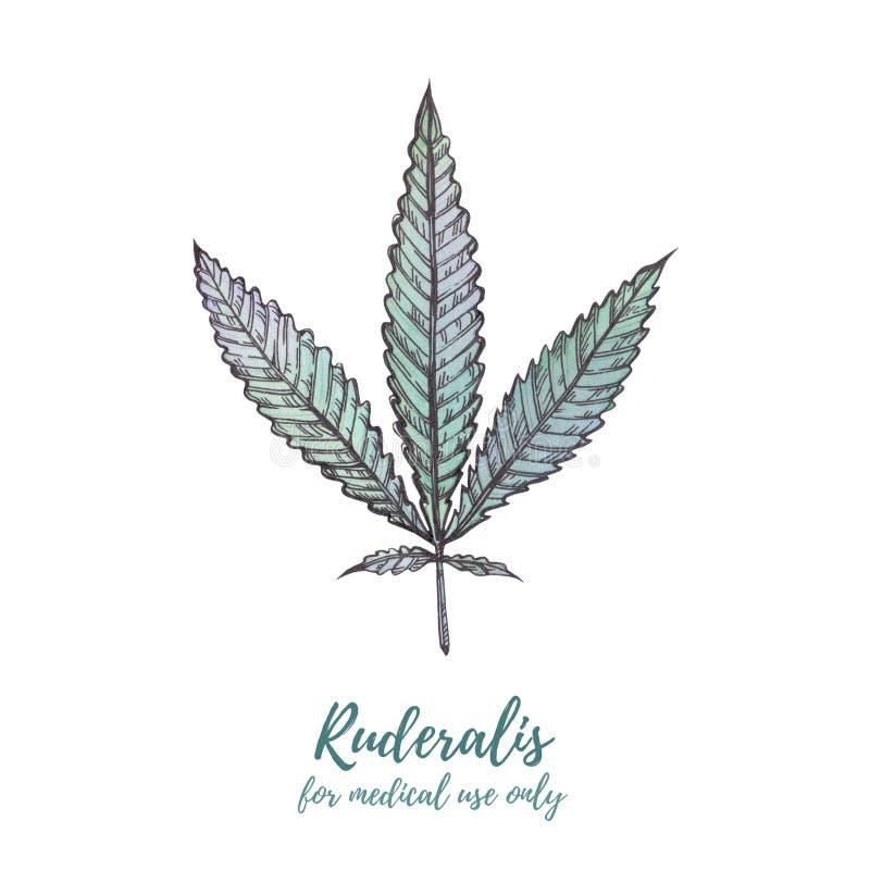 Akwareli ilustraci marihuana Marihuana sativa, marihuana Ind fotografia royalty free