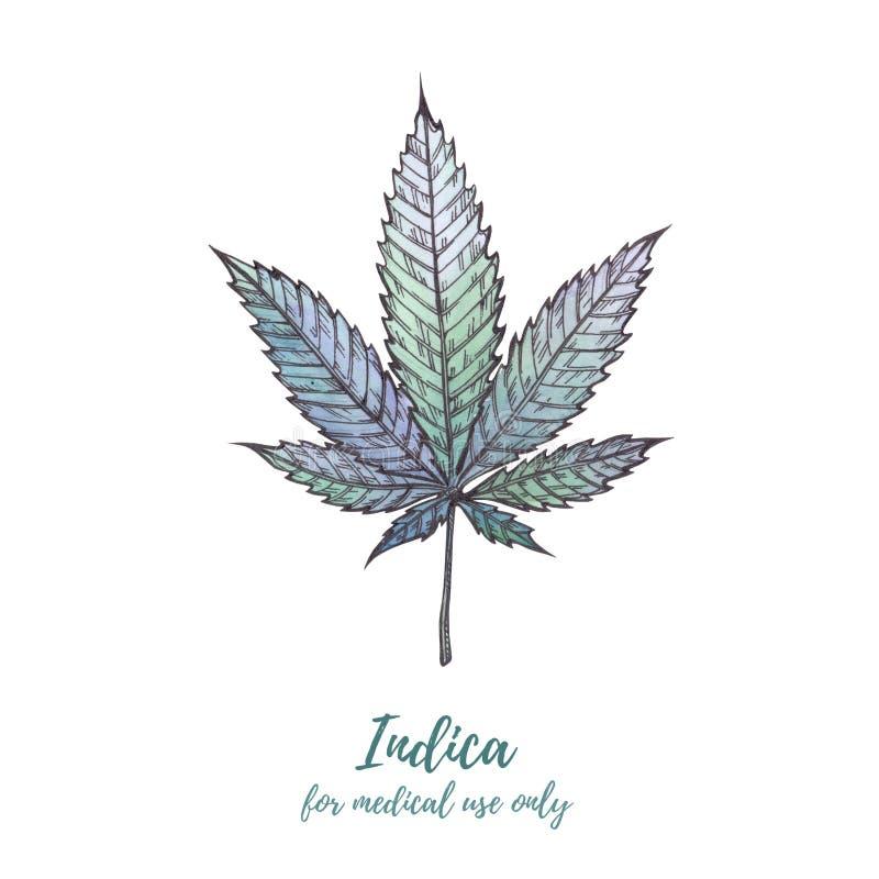 Akwareli ilustraci marihuana Marihuana sativa, marihuana Ind obraz royalty free