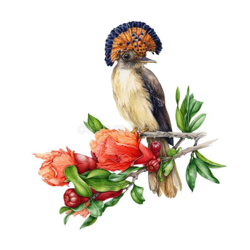 Akwareli ilustracja Amazon raju flycatcher obsiadanie na gałąź granatowa drzewo pojedynczy bia?e t?o ilustracja wektor