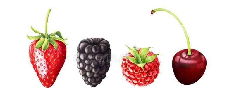 Akwareli ilustracja jagody Truskawka, czernica, malinka, wiśnia odizolowywająca na białym tle ilustracji