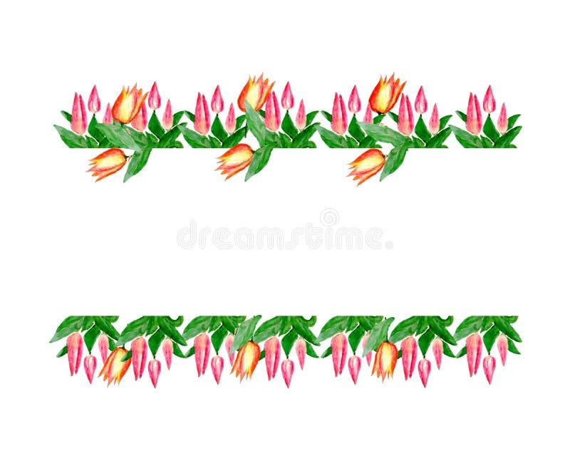 Akwareli ilustracja kwitnie od różowych tulipanów ilustracji