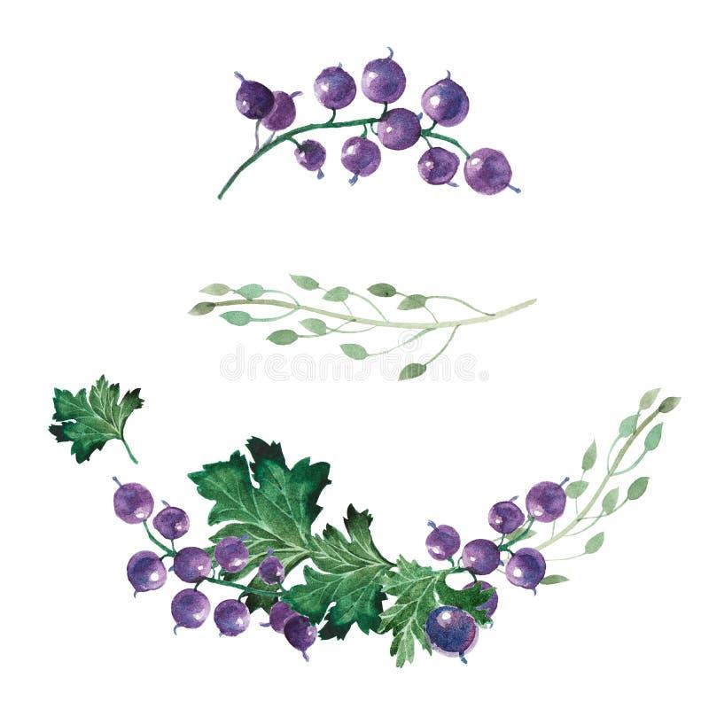 Akwareli ilustracja rodzynki, liście i wildflowers, ilustracja wektor