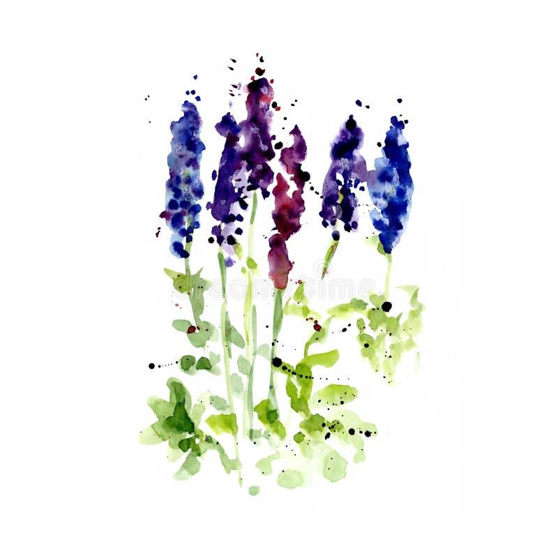 Akwareli ilustracja wildflowers, malujący lupines na barwionym tle i bielu royalty ilustracja