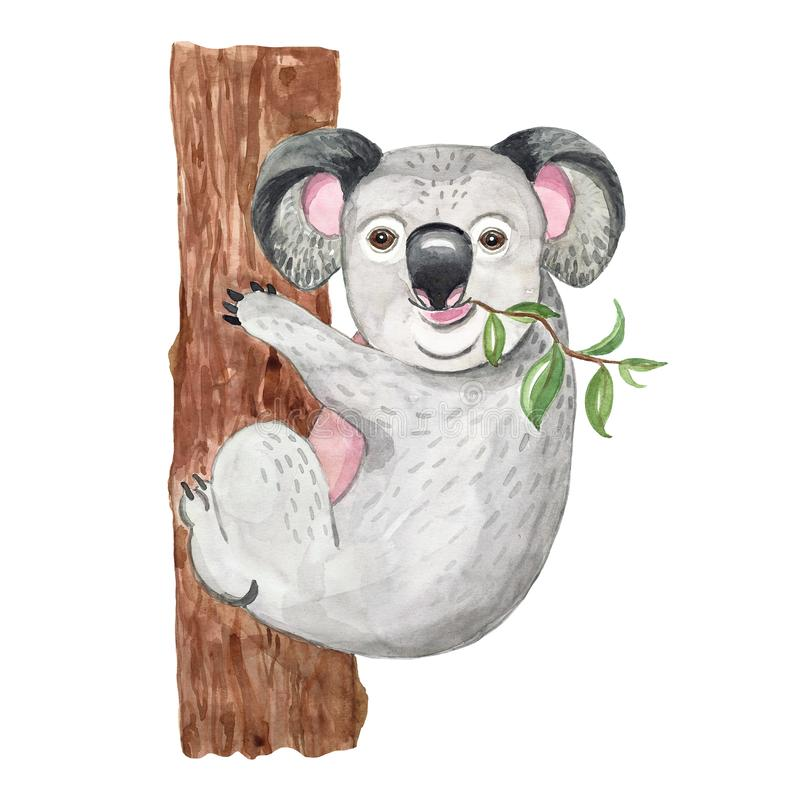 Akwareli ilustracja z śliczną koalą Egzotyczny australijski zwierzę, odizolowywający Kreskówki dżungli egzotyczny druk, lato sztu obrazy stock