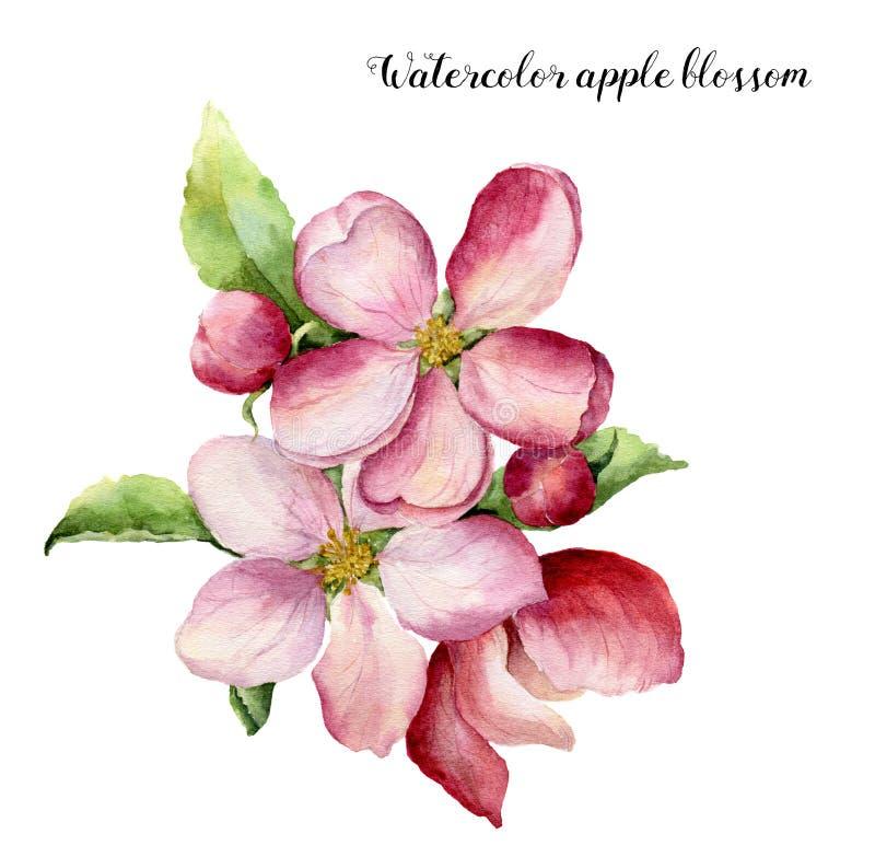 Akwareli jabłczany okwitnięcie Ręka malował kwiecistą botaniczną ilustrację odizolowywającą na białym tle Różowy kwiat dla royalty ilustracja