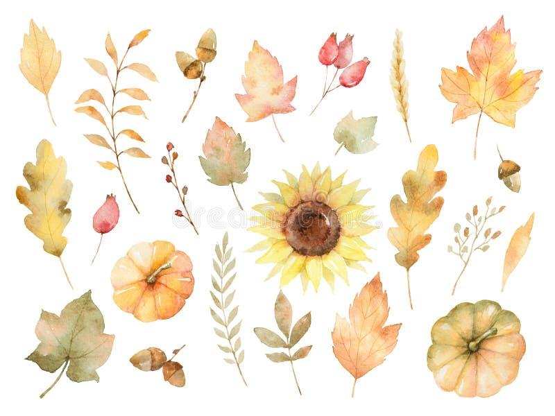 Akwareli jesień ustawiająca liście, gałąź, kwiaty i banie odizolowywający na białym tle, royalty ilustracja