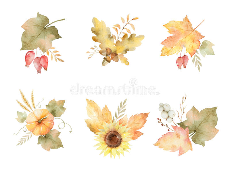 Akwareli jesień ustawiająca liście, gałąź, kwiaty i banie odizolowywający na białym tle, ilustracji