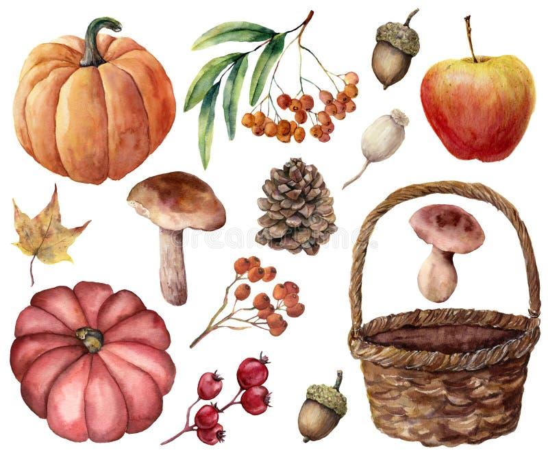 Akwareli jesieni żniwa jaskrawy set Wręcza malować banie, liście, pieczarki, rowan, jabłko, rożek, acorn, wyplatający kosz royalty ilustracja
