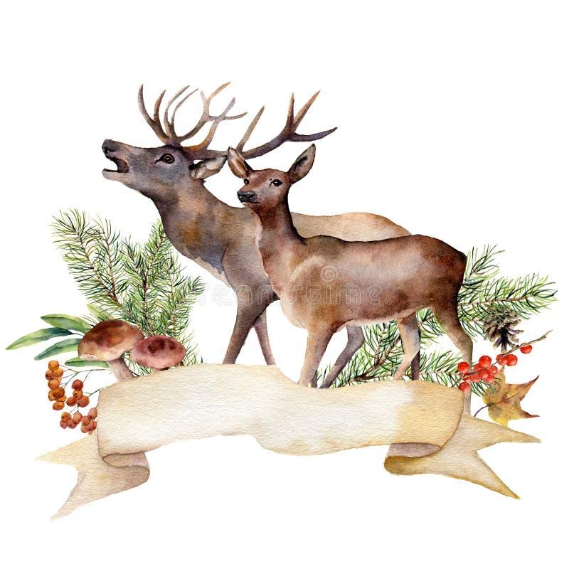 Akwareli jesieni lasowa etykietka Ręka malujący faborek z czerwonymi deers, pieczarkami, rowan, jagodami i sosny gałąź odizolowyw ilustracji