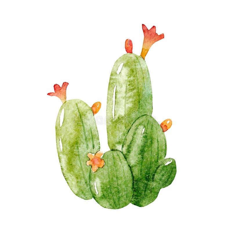 Akwareli kaktusowa wektorowa ilustracja royalty ilustracja