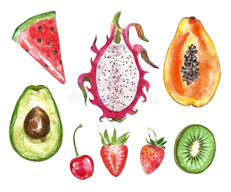 Akwareli kolekcja malująca lato owoc smoka owoc, melonowiec, avocado, arbuza plasterek, truskawka, kiwi owoc, wiśnia, ilustracja wektor