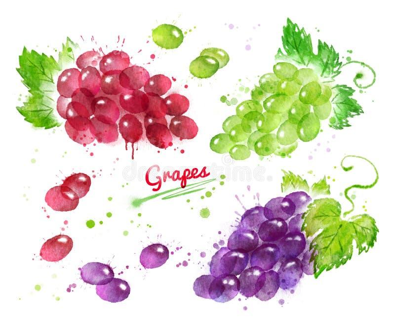 Akwareli kolekcja wiązki winogrona ilustracji