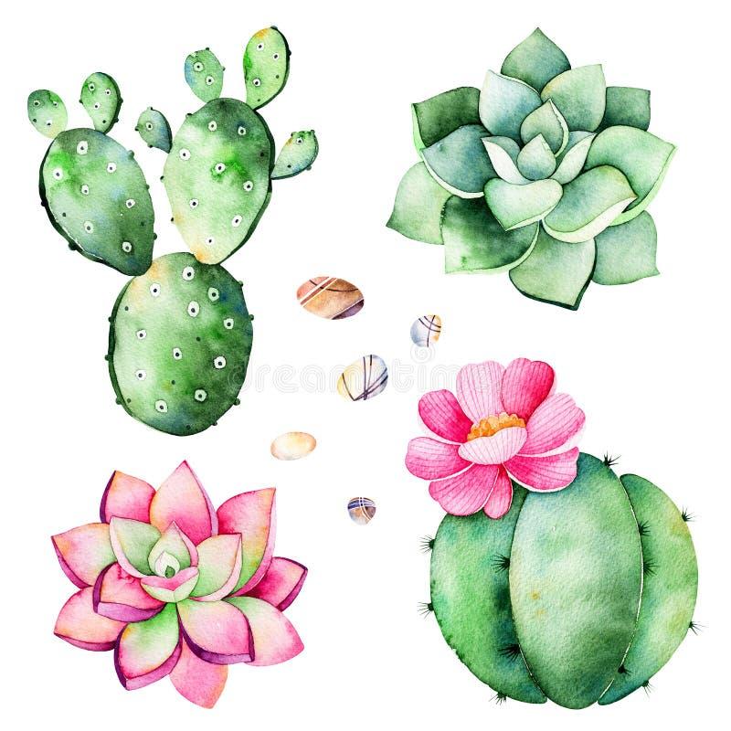 Akwareli kolekcja z sukulent roślinami, otoczaków kamienie, kaktus