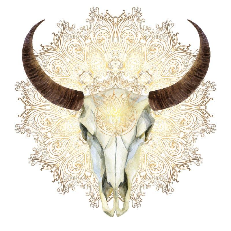 Akwareli krowy czaszka ilustracji