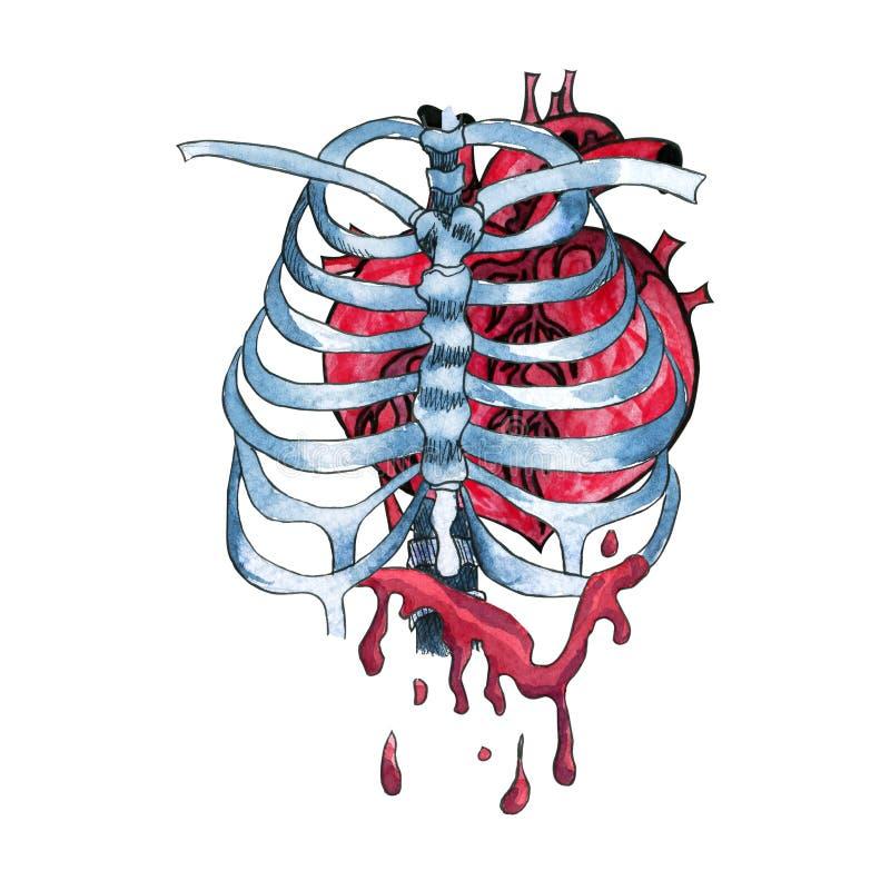 Akwareli krwawiący ludzki serce wśrodku zredukowanych kości royalty ilustracja